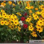 Trauer-Blumen_0056