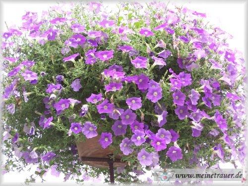 Trauer-Blumen_0078
