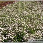 Trauer-Blumen_0029