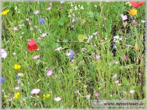 Trauer-Blumen_0052