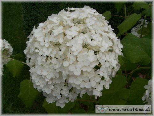 Trauer-Blumen_0082