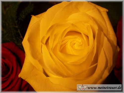 Trauer-Blumen_0117