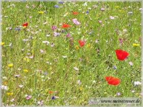 Trauer-Blumen_0048