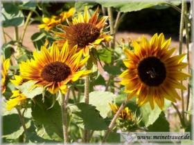 Trauer-Blumen_0035
