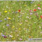 Trauer-Blumen_0047