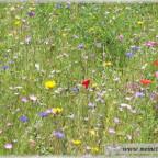 Trauer-Blumen_0049
