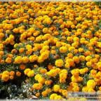 Trauer-Blumen_0010