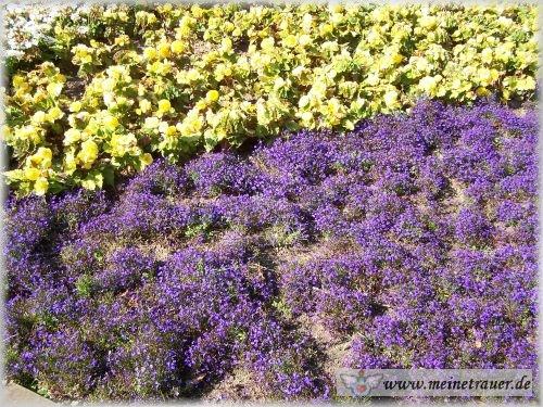 Trauer-Blumen_0021