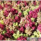 Trauer-Blumen_0014