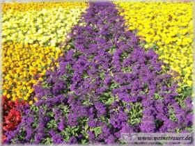 Trauer-Blumen_0027