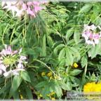 Trauer-Blumen_0096