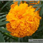 Trauer-Blumen_0092