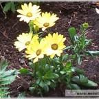 Trauer-Blumen_0002
