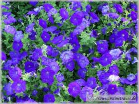 Trauer-Blumen_0031