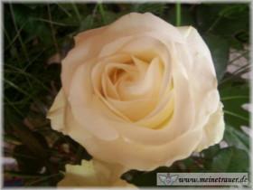 Trauer-Blumen_0126