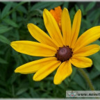 Trauer-Blumen_0068