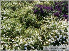 Trauer-Blumen_0044