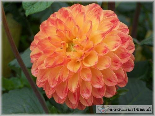 Trauer-Blumen_0070