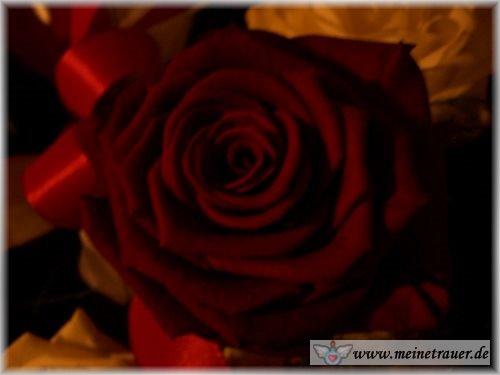 Trauer-Blumen_0119