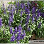 Trauer-Blumen_0085