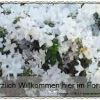 Trauerforum Willkommen 010