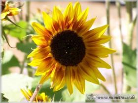 Trauer-Blumen_0037