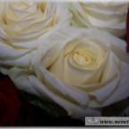Trauer-Blumen_0107