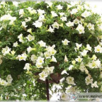 Trauer-Blumen_0077