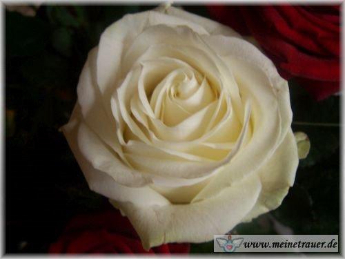 Trauer-Blumen_0121