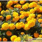 Trauer-Blumen_0011