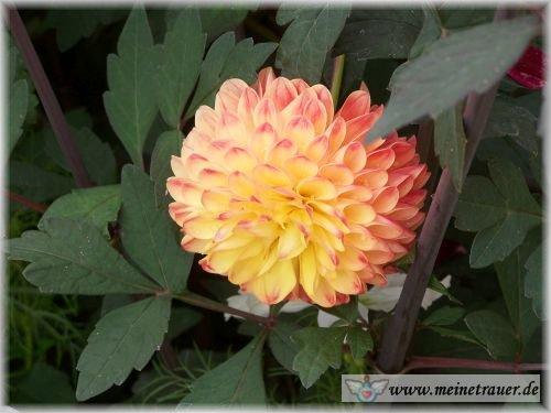 Trauer-Blumen_0069