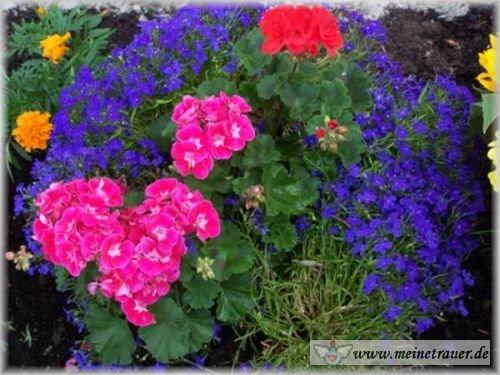 Trauer-Blumen_0003