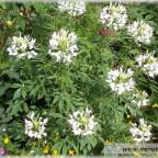 Trauer-Blumen_0095