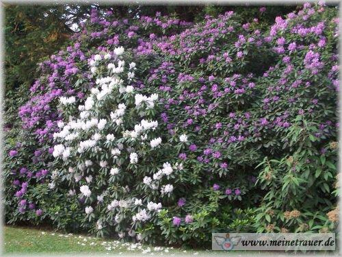Trauer-Blumen_0102