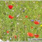 Trauer-Blumen_0050