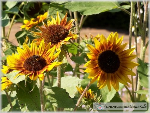 Trauer-Blumen_0036