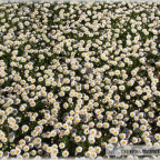 Trauer-Blumen_0015