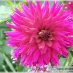 Trauer-Blumen_0084