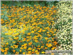 Trauer-Blumen_0030