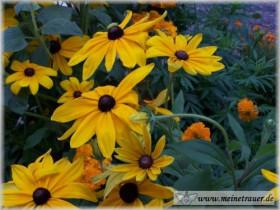 Trauer-Blumen_0060