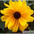 Trauer-Blumen_0080