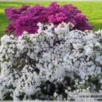 Trauer-Blumen_0135