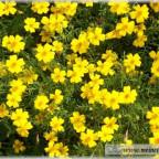 Trauer-Blumen_0086