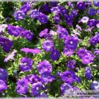 Trauer-Blumen_0045