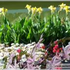 Trauer-Blumen_0046