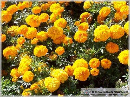 Trauer-Blumen_0013