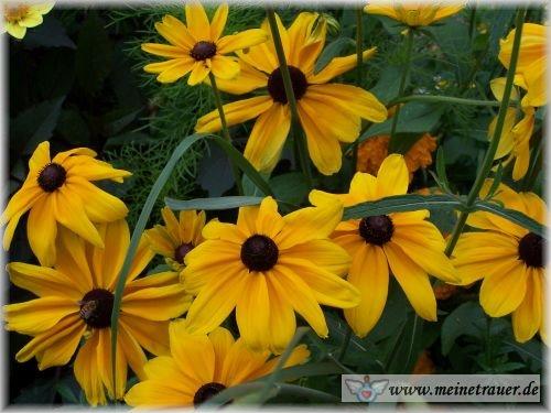 Trauer-Blumen_0059