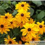 Trauer-Blumen_0072