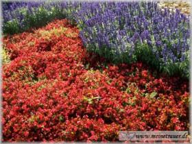 Trauer-Blumen_0039