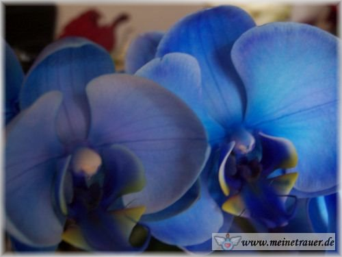 Trauer-Blumen_0130